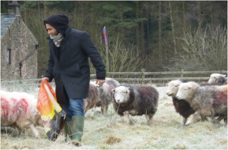 Students Feeding Sheep